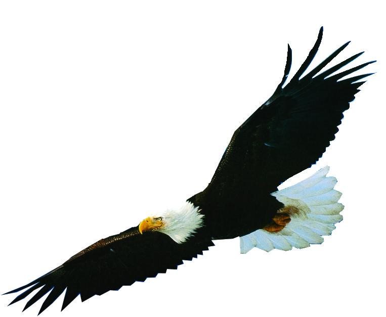 гиф орел без фона действия производите свой